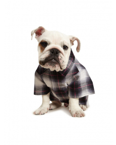 Lowes Dog Flannelette Shirt Black Pink Check