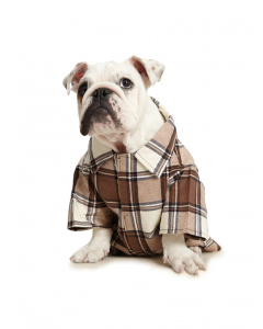 Lowes Dog Flannelette Shirt Brown Check