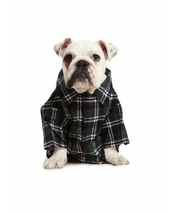 Lowes Dog Flannelette Shirt Green Black Check