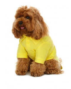 Lowes Dog Yellow Polo