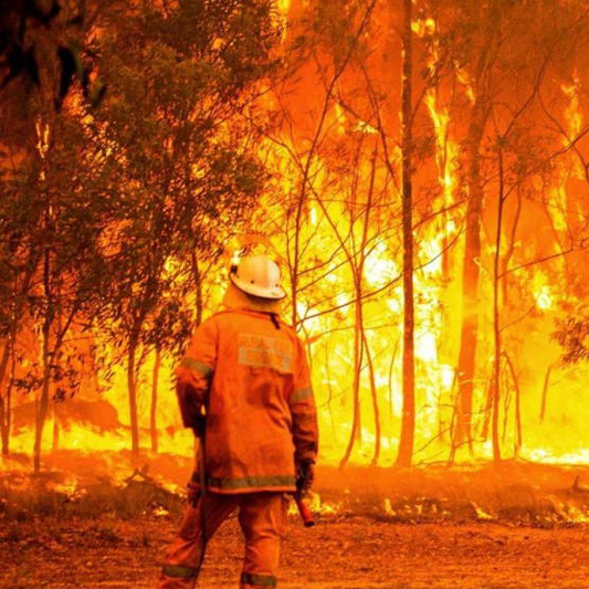 BUSH FIRE APPEAL